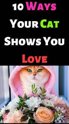 10 Ways Your Cat Shows You Love – #cutecat #instacats #cutecats #petstagram #kittensofinstagram #catloversclub #petsofinstagram #dog #ilovecats #catslife #features #catsoftheday #kittycat #catsoftheworld #instagood #photooftheday #katze #catsofig #caturday #catsofinsta #catsofworld #instagramcats #katzen #gatto #chat #gatosdeinstagram #catslover #photography #nature #blackcat – ANIMALS LOVELY Funny Cat Videos, Funny Cats, Funny Animals, I Love Cats, Cool Cats, Kittens Cutest, Cats And Kittens, Cat Crying, Funny Laugh