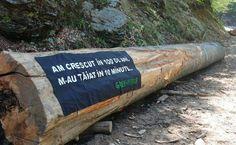 Cum poate fi oprită masacrarea pădurilor – soluţiile societăţii civile -Stop defrişărilor. (Greenpeace) http://epochtimes-romania.com/news/cum-poate-fi-oprita-masacrarea-padurilor-solutiile-societatii-civile---231848