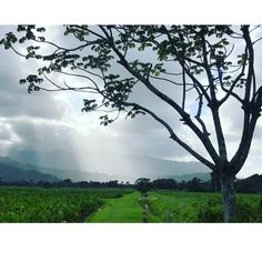 Concentrate all your #thoughts upon the #work at hand. The #sun's #rays do not burn until brought to a #focus Alexander Graham Bell  Hoopulapula Haraguchi Rice Mill agrarian museum & #HanaleiTaro Farm  http://ift.tt/1NZTmBt  Hanalei farm fresh #eats daily 11am-3pm .  #plants #plantsofinstagram #horticulture #garden #Community #nonprofit #generations #nature #photography #farmer #challenges #perseverance #preservation  #motivation #monday #sustainability #outdoors #family #farm #Kauai #Hawaii…
