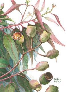 Gumnuts and Gumleaves Australian Native Watercolour by Debra Meier Art - xenia Australian Wildflowers, Australian Native Flowers, Australian Art, Watercolor Flowers, Watercolor Paintings, Watercolours, Floral Paintings, Indian Paintings, Abstract Paintings