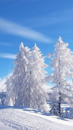 A bluebird day against a winter wonderland. Watch out for those sun rays bouncing off the snow!