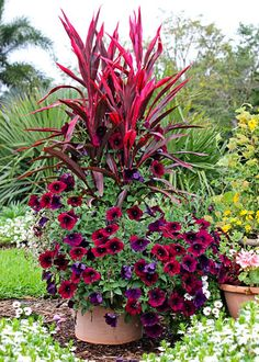Cordyline as Thriller in Container | The Home Depot's Garden Club