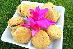 Sugar Free Low Carb Lady's Kisses (Baci di Dama) are my healthy version of the renowned Italian sandwich cookies. Low Carb Sweets, Low Carb Desserts, Healthy Sweets, Low Carb Recipes, Diet Recipes, Healthy Snacks, Low Card Meals, Diabetic Desserts, Sugar Free Recipes