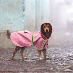 Us 918 10 Off Waterproof Puppy Pet Dog Raincoat Dog Coat Jacket Reflective Dog Rain Gear Clothes For Small Medium Large Dogs Labrador 4 Colors In King Charles Spaniels, Cavalier King Charles, Big Dogs, Large Dogs, Baby Raincoat, Small Dog Coats, Spaniel Dog, Cat Sleeping, Pet Supplies