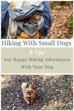 Just because your dog is small doesn't mean you shouldn't take them on hiking trips. Hiking with small dogs can be very rewarding for you both. These simple tips will ensure you small dog has safe fun and active hiking trips.  #hikingwithdogs #smalldogshiking #dogtips #smalldog