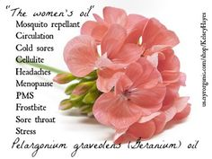 Certified organic, 100% pure Geranium oil. Click here to add this oil to your natural medicine cabinet at home. Directions-Baths: blend 5-8 drops in a teaspoon of carrier oil or whole milk, add to bath. Massages: add 2-3 drops of essential oils to 3 tablespoonfuls of carrier oil. Vaporization: add 2-4 drops of essential oils to a burner or vaporizer. $16.75.