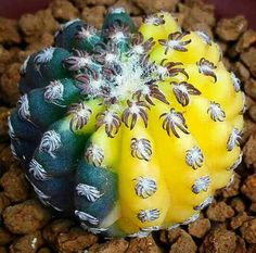 Cactus of world
