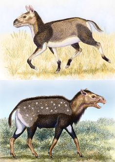 Remember as always I'm using lots of imagination with the colour schemes of these prehistoric mammals! I'm sure to be wrong but I hope at least I'm entertainingly wrong. Here we compare two c...