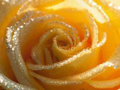 Uta Naumann: Gelbe Rose Makro  #artgalerie-bildershop.de