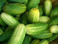 Shop for Cucumber seeds by the Packet or by the Pound.Com offers Hundreds of Seed Varieties, Including the Finest and Freshest Vegetable and Herb Seeds Anywhere. Making Dill Pickles, Sour Pickles, Lime Pickles, How To Make Pickles, Butter Pickles, Cucumber Seeds, Tupperware Recipes, Pickling Cucumbers