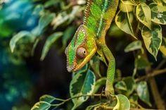 Prentresultaat vir Amazing Animals & Beautiful Nature