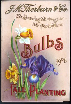 Front Cover, 1906 Fall Planting Bulbs by J.M.Thorburn & Co.