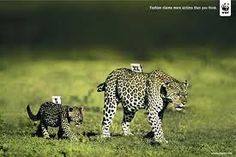 Resultado de imagen para fotografias de los animales en su habitat mas impresionantes