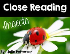 Close Reading passages on ladybugs, ants, praying mantis, grasshoppers and dragonflies.  Full explanation of what close reading is and how to implement it in the classroom.  Open ended questions, questioning to support text, vocabulary word review and definition pages, webs, identifying key elements and key features of texts are all included in this 26 page product.