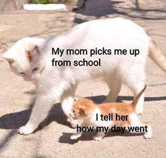 Animal Jokes, Funny Animal Memes, Cute Funny Animals, Cat Memes, Cute Baby Animals, Cute Animal Humor, Animal Humour, Funny Cute Cats, Mom Funny