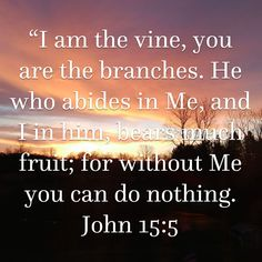 """John """"I am the vine, you are the branches. He who abides in Me, and I in him, bears much fruit; for without Me you can do nothing. Prayer Scriptures, Scripture Verses, Bible Verses Quotes, Faith Quotes, Catholic Quotes, Religious Quotes, Spiritual Quotes, Christian Life, Christian Quotes"""