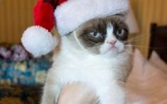 Best Grumpy Cat Memes Of All Time About