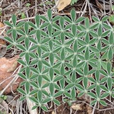 flower of life in nature