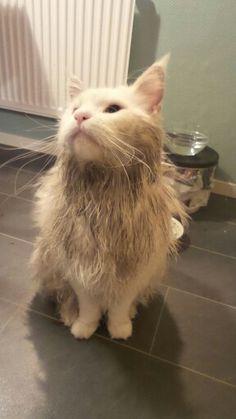 Skitig  vit katt. Banjo