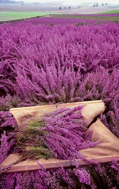 """""""And the wild mountain thyme grows around the blooming heather"""""""
