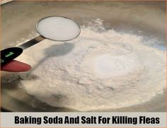 How To Use Salt To Kill Fleas Fleas Home Remedies For