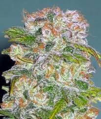 #Cannabis #Strains