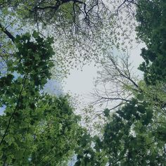 #beautyeverywhere      #nature #forestbathing #canopy #lookingup #trees #crevecoeurpark #Missouri #summertime #sky #beauty by @__camila_______ Shinrin Yoku, Forest Bathing, Looking Up, Missouri, Canopy, Insta Like, Summertime, Therapy, Trees