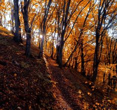 Autumn in South Sweden - #funny #lol #viralvids #funnypics #EarthPorn more at: http://www.smellifish.com