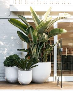 And videos indoor plants, pool plants, balcony plants, balcony garden, gard Outdoor Pots, Outdoor Gardens, Outdoor Living, Large Outdoor Planters, Large Garden Pots, Potted Garden, Large Flower Pots, Small Outdoor Spaces, Large Pots