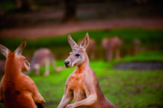 Currumbin Wildlife S