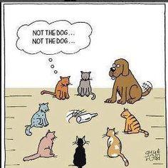 Het eerste gewin is katten gespin