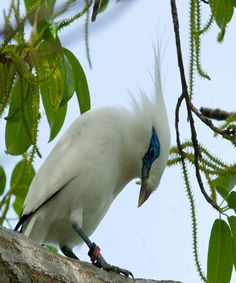 Very Beautiful White Bird