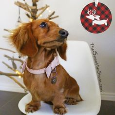 Dachshund Christmas Tree Ornament - Buffalo Plaid by The Smoothe Store - featuring @river_the_mini_dachshund