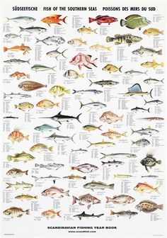 Poissons d/'eau douce 53 espèces sportsfisherman Fly Fishing Wall Chart Affiche