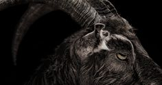 'The Witch' Trailer Scares with Black Magic & Possession -- The first trailer for 'The Witch' shows off an exquisitely-made and terrifying new horror film from director Robert Eggers. -- http://movieweb.com/witch-movie-trailer-2016/