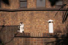 煙突と猫 | Flickr - Photo Sharing!