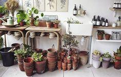 Mi-fleuriste, mi-magasin de décoration, Botany Shop, à Londres, propose des plantes, des produits de beauté, des outils de jardinage.
