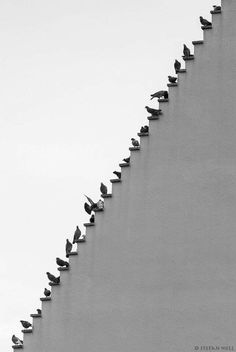 Pigeons on Stairs by Stefan Holl