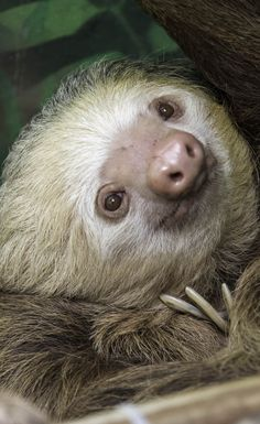 At the sloth sanctuary at Limon, Costa Rica