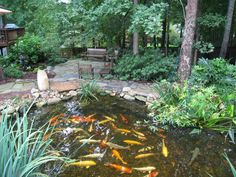 Great back yard pond.  Follow link for DIY directions.koi  pond