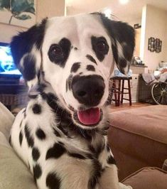 Dalmatian with heart eyes 😍😍 Via Charlene Brown.dalmatian via… Dalmatiner mit Herzaugen 😍😍 Via Charlene Brown. Cute Funny Animals, Cute Baby Animals, Animals And Pets, Funny Looking Animals, Funniest Animals, Cute Dogs And Puppies, I Love Dogs, Doggies, Adorable Puppies