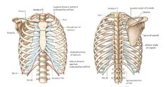 """Can your rib actually """"pop out"""" - A Guide To A Dislocated Rib Generally speaking, medicine can't explain a dislocated rib! Rib Pain, Healing Herbs, Ribs, Cage, Feels, Health, Salud, Health Care"""