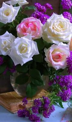 Exotic Flowers, Amazing Flowers, Beautiful Roses, Purple Flowers, Beautiful Flowers, Flower Bird, Flower Pots, Corporate Flowers, Rose Images