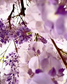 Photo Shooting Paris - Photoshoot in Paris France - Hervé Mouyal Photography Black Flowers, Pretty Flowers, Spring Flowers, Rain Flowers, Frühling Wallpaper, Flower Wallpaper, Beautiful Flowers Wallpapers, Beautiful Nature Wallpaper, Paris Photoshoot