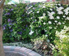 garten gestalten bilder gartenzaun dekoideen kletterpflanzen