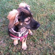 Beautiful Girl. Matilda the Romanian Rescue Pup
