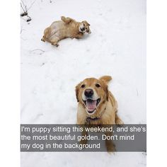 14 Hilariously Candid Dog Photos