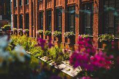 Natura i industrialne otoczenie? Para doskonała! - Inspirowani Naturą Flower Boxes, Flowers, Cities, Urban, Plants, Stop It, Window Boxes, Planter Boxes, Plant