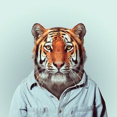 "Zoo Portraits by Yago Partal //  Spanish photographer Yago Partal created this funny photographic project called ""Zoo Portraits"", featuring animals dressed as humans."