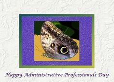 Happy Administrative Professionals Day Butterfly Greeting Card